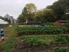 2014_COE_Field_Trip_to_Binghamton_Urban_Farm_crops