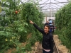 2014_COE_Field_Trip_to_Binghamton_Urban_Farm_in_greenhouse
